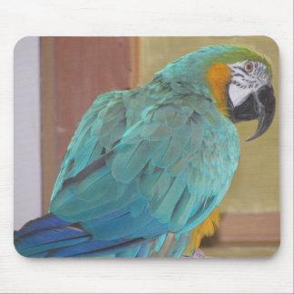 Macaw Mousepad del azul y del oro Tapete De Ratones