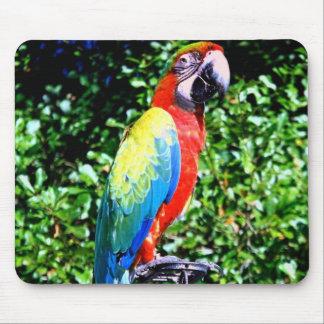Macaw Mousepad Alfombrilla De Ratón