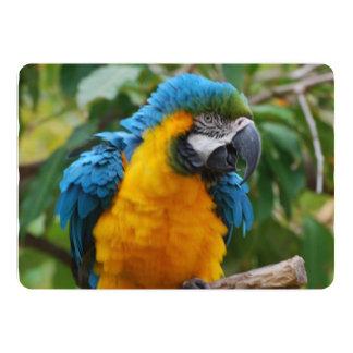 Macaw mullido del azul y del oro invitación 12,7 x 17,8 cm