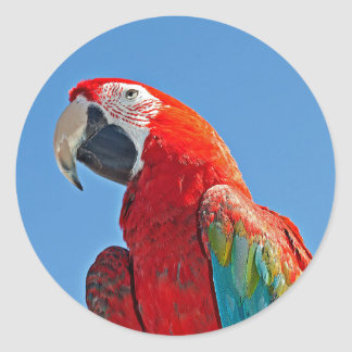 Macaw multicolor pegatina redonda