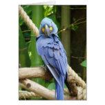 Macaw Notecard del jacinto