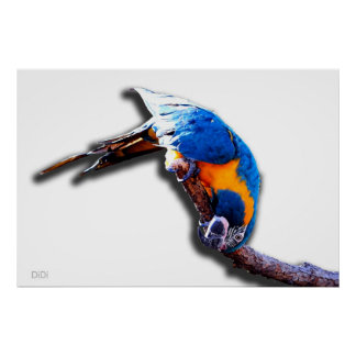 Macaw On A Stick poster