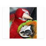 macaw pair postcard