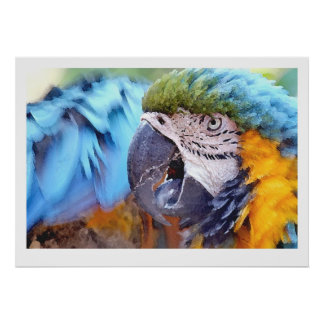 Macaw Parrot Bird Wildlife Animals Poster