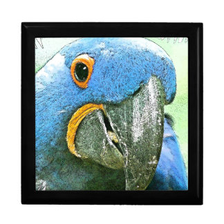 Macaw Parrot Birds Animal Wildlife Jewelry Box