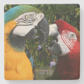 Macaw Parrot Birds Animal Wildlife Stone Coaster
