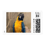Macaw Parrot - Feather Fashionista Stamp