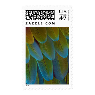 Macaw parrot feather pattern detail postage stamp