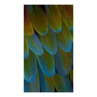 Macaw parrot feather pattern detail poster