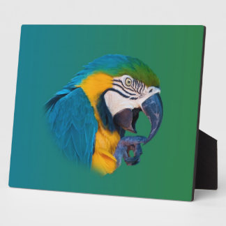 Macaw Parrot, Green and Blue, Plaque