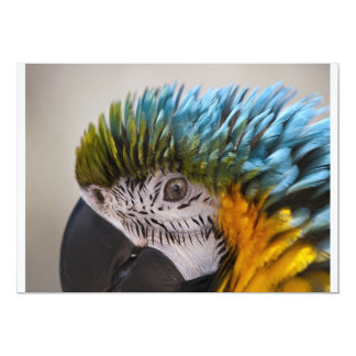 Macaw Parrot - Invitation