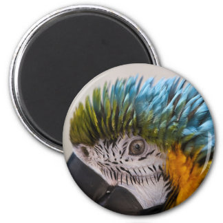Macaw Parrot - Magnet