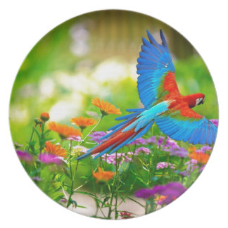 Macaw Parrot Melamine Plate