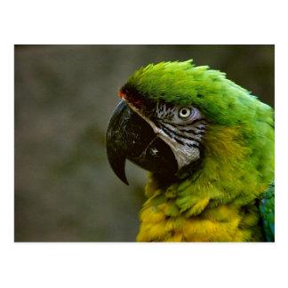 Macaw Parrot Photo Postcard