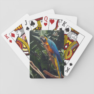 Macaw Parrot Playing Cards