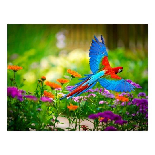Macaw Parrot Postcard