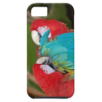 Macaw parrot print iphone cover