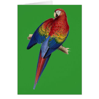 Macaw Parrot Red Yellow Blue Green Bird Card