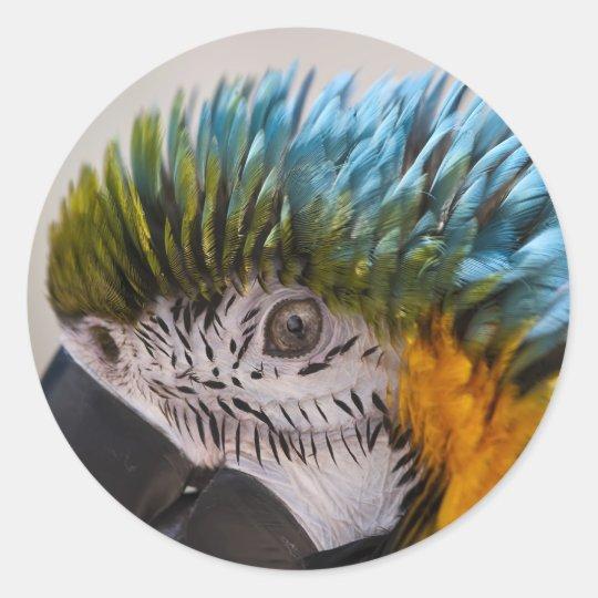 Macaw Parrot - Sticker