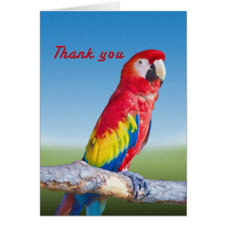 Macaw Parrot Thank You Card