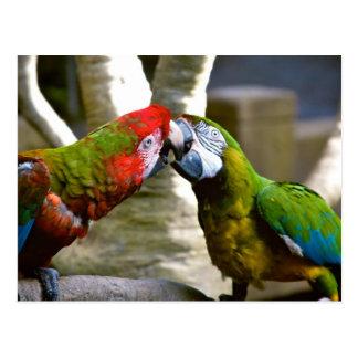 Macaw Parrots 2013 Calendar Postcard