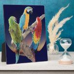 Macaw Parrots Display Plaques