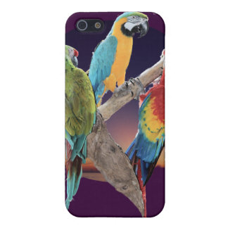 Macaw Parrots iPhone 5 Cover