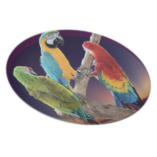 Macaw Parrots Plate