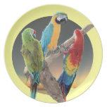 Macaw Parrots Plates