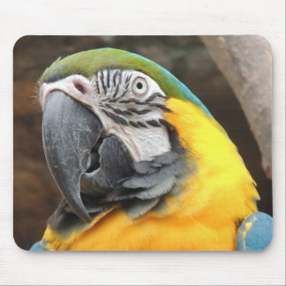 Macaw Peace Mouse Pad