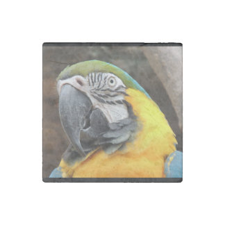 Macaw Peace Stone Magnet