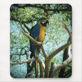 Macaw Photograph Mouse Pad