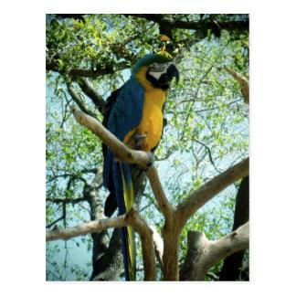 Macaw Photograph Postcard