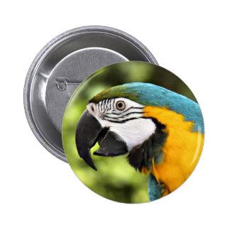 Macaw Pin Redondo De 2 Pulgadas