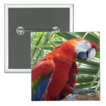 Macaw Pins