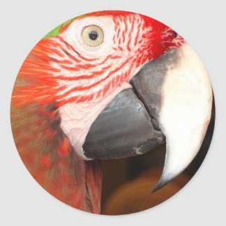 Macaw Portrait Round Sticker