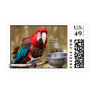 Macaw Postage Stamp