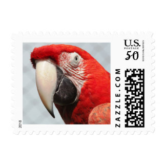 Macaw Postage Stamps