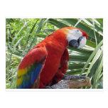 Macaw Postal