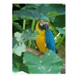 Macaw Postales