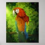 Macaw - poster 8x10 del arte de la fauna