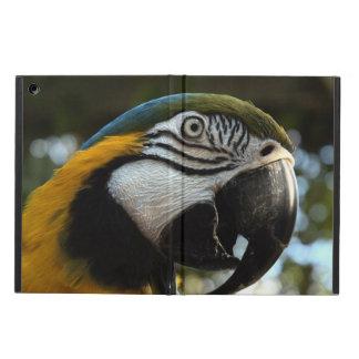 Macaw Powis del azul y del oro