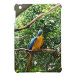 Macaw que se sienta en la rama en parque del pájar