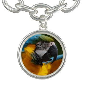 Macaw rizado del azul y del oro pulsera con dije