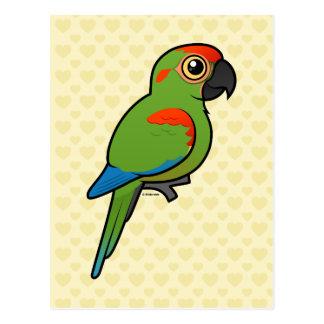 Macaw Rojo-afrontado Tarjetas Postales
