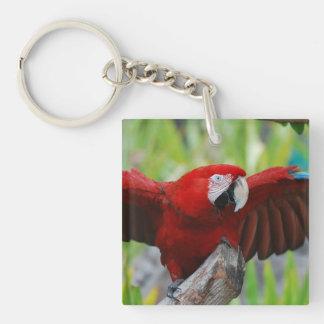 Macaw rojo del escarlata llavero cuadrado acrílico a una cara