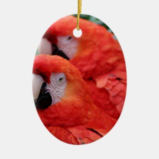 Macaw rojo del escarlata ornamentos de navidad