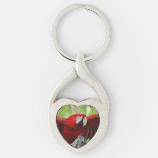 Macaw rojo del escarlata llavero plateado en forma de corazón