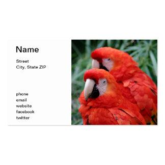Macaw rojo del escarlata tarjetas de visita