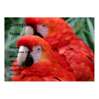 Macaw rojo del escarlata tarjetas de visita grandes
